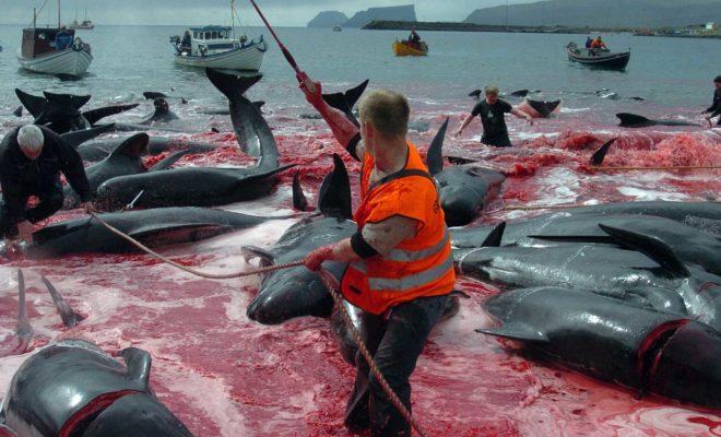 Balene uccise
